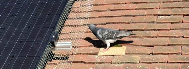 solar panel bird deterrent kit - pigeon on roof
