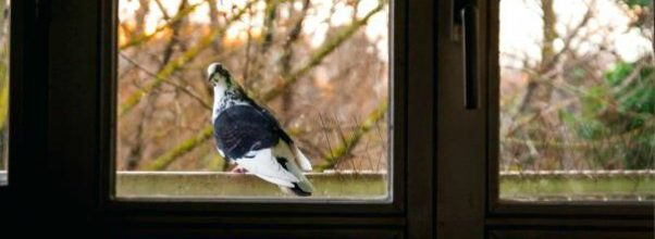 ways to get rid of birds on the porch - perching bird