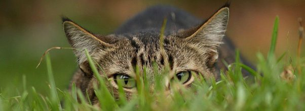 natural bird control solutions - cat on the grass