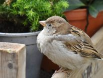 Stop Sparrows And Starlings From Nesting Under Your Eaves